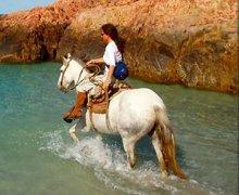 лошади и конный спорт